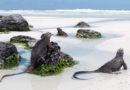 Enestående dyreliv på Galapagos